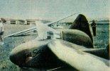 Inż. Skrzydlewski, pilot doświadczalny SZD, na chwilę przed startem na bezogo¬nowcu AV-36 na lotnisku w Chavenay, 1959 r.  (Źródło: Skrzydlata Polska nr 34/1959).