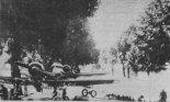 """Samoloty """"Karaś"""" z 41 Eskadry Rozpoznawczej w okresie działań wojennych we wrześniu 1939 r. zamaskowane w pobliżu lotniska polowego Zdunowo. (Źródło: Skrzydlata Polska nr 39/1976)."""